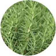 Aceite esencial ecológico romero alcalfor