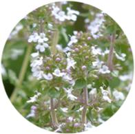 Aceite esencial ecológico tomillo blanco