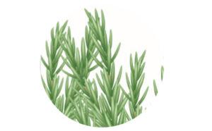 aceite para masaje eucalipto