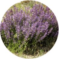 Aceites esenciales ecológicos salvia lavansufolia
