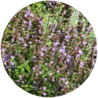 Aceites esenciales ecológicos salvia officinalis