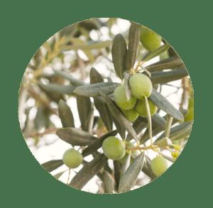aceites vegetales oliva