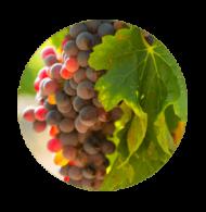 aceite vegetal uva