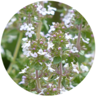 Organic thyme white essential oil spanish